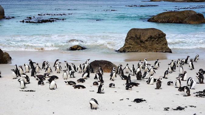 Photo Afrique du Sud