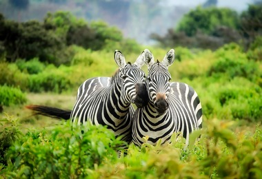 Safari Ndefu au Kenya