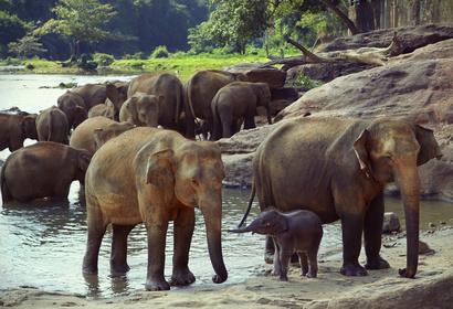 Autotour en Afrique du Sud - Du Cap à Addo Elephant, voyage Afrique