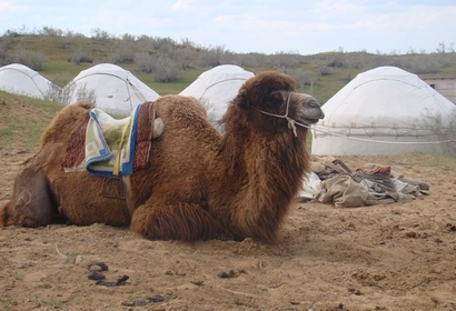 Voyage en Ouzbékistan : Méharée dans le désert de KyzylKum, voyage Asie et Océanie