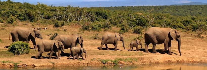 Voyage au Kenya : Safari Karibuni, voyage Afrique