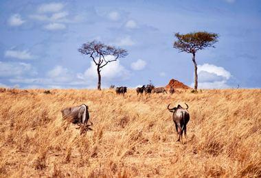 Panorama de Tanzanie - Safari photo au coeur de la savane, voyage Afrique