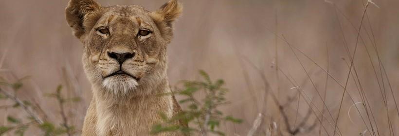 Combiné luxe : Safaris en réserve privée & Ile de Benguerra, voyage Afrique