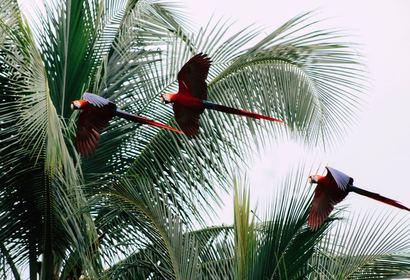 Charmant Costa Rica : entre authenticité et douceur de vivre, voyage Amérique Centrale
