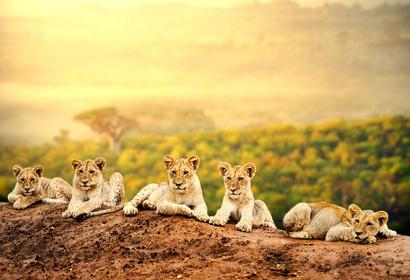 Voyage Afrique du Sud - Réserve privée Sabi Sand, voyage Afrique