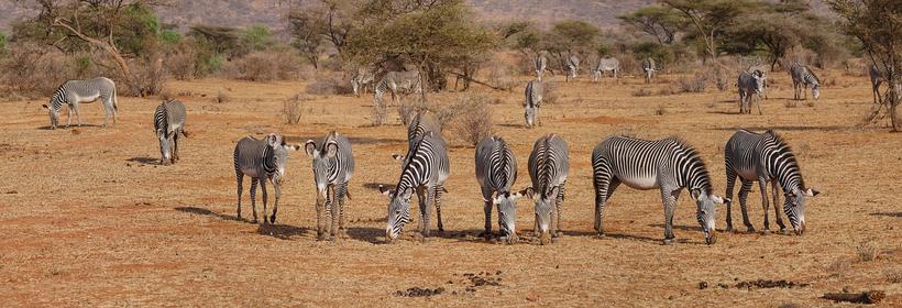 "Kenya : Safari ""Ndefu"" en terre Masaï, voyage Afrique"