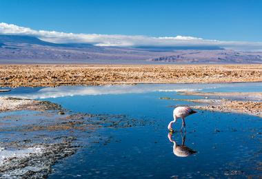 Voyage au Chili : Du Désert d'Atacama à la Patagonie - un voyage d'exception, voyage Amérique du Sud