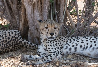 Safari Kenya en avion taxi - Version luxe, voyage Afrique