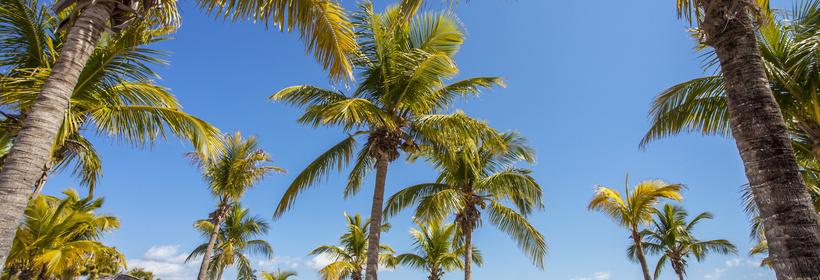 Le Grand Tour de Floride, voyage Amérique du Nord