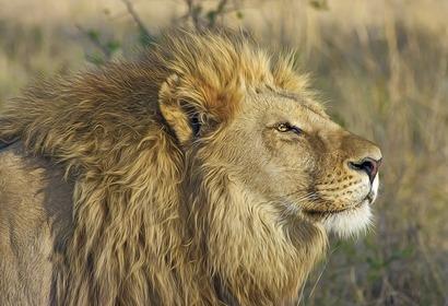 Voyage au Kenya : Éco-safari en terre Kenyane, voyage Afrique
