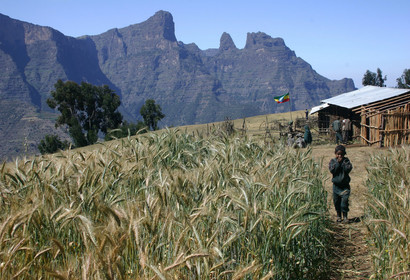 Trekking dans les hauts plateaux éthiopiens, voyage Afrique