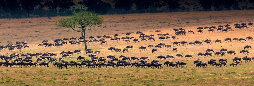 Voyage en Tanzanie : La grande migration, voyage Afrique