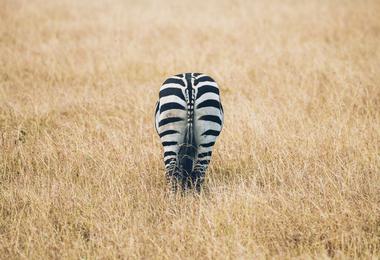 Safari Big Five - Panorama du Kenya en petit groupe, voyage Afrique