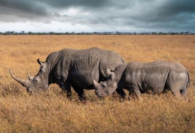Voyage au  Kenya hors des sentiers battus, voyage Afrique