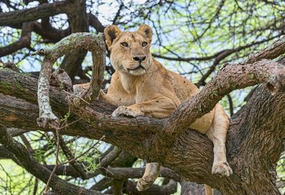 Safari en Tanzanie - Circuit Swala Tembo en petit groupe, voyage Afrique