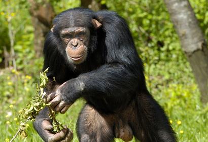 Voyage Ouganda : Safari sur la piste des Gorilles de Montagne, voyage Afrique