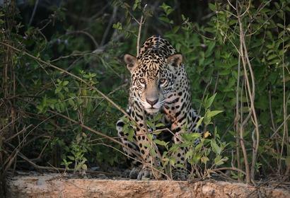 Le meilleur de la faune et de la flore en Amazonie et au Pantanal, voyage Amérique du Sud