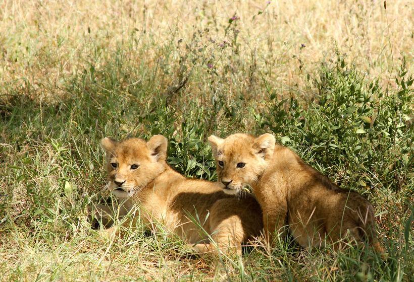 Safari Tanzanie - Les réserves du Sud hors des sentiers battus, voyage Afrique