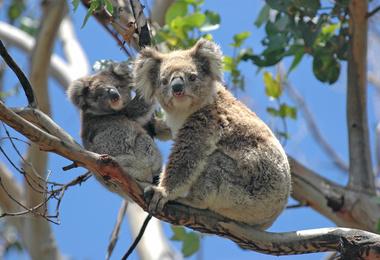 Escapade de charme sur l'île de Kangaroo Island, voyage Asie et Océanie
