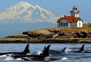 Découverte de la Colombie Britannique - Spécial Orques, voyage Amérique du Nord