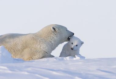 Churchill - Sur les traces des ours polaires, voyage Amérique du Nord
