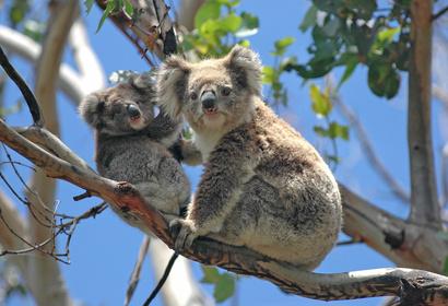 Explora Australia, voyage Asie et Océanie