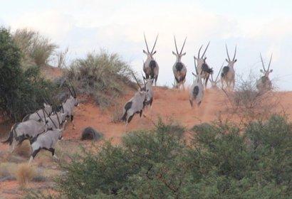 Voyage en Namibie sur Mesure - les incontournables, voyage Afrique