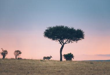 Combiné Kenya - Tanzanie : Les incontournables, voyage Afrique