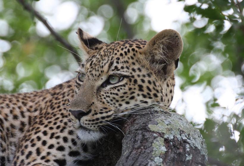 Emotions sauvages : safaris à Marakele & Madikwe, voyage Afrique