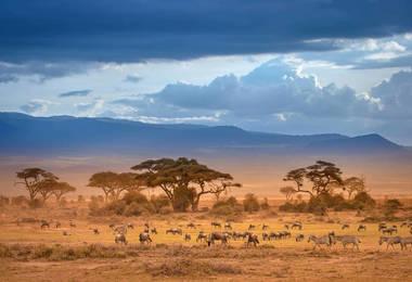 Safari Photo au Kenya : Les incontournables, voyage Afrique