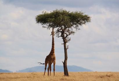 Safari culinaire au Kenya, voyage Afrique