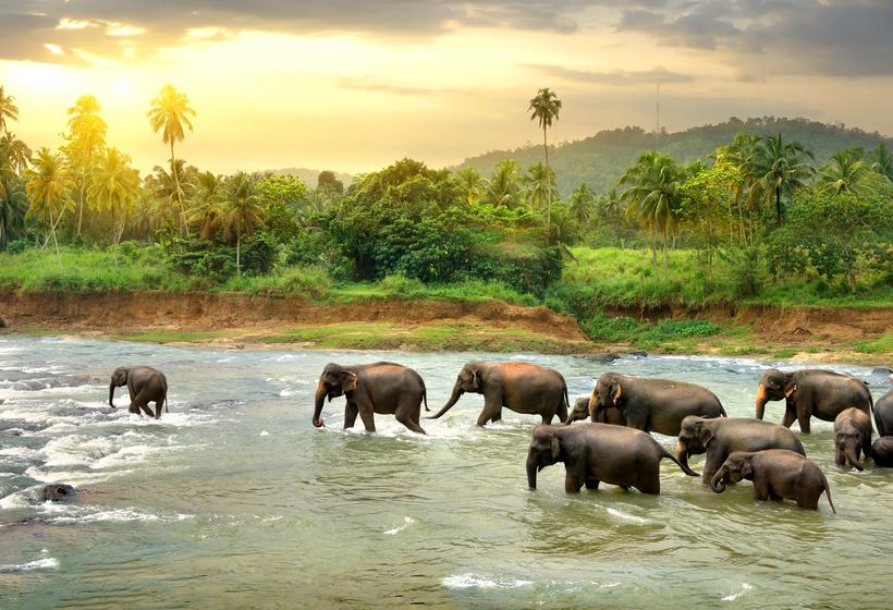 Les merveilles de Ceylan, voyage Asie et Océanie