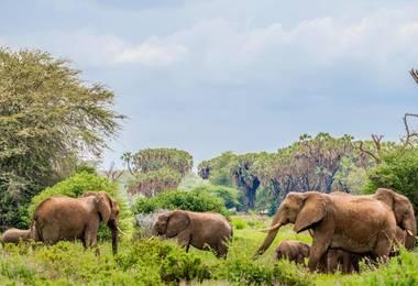 Safari luxe au Kenya avec séjour balnéaire à Laamu, voyage Afrique