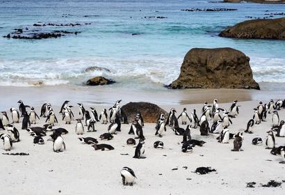Voyage en Afrique du Sud : Du Cap à la Route des Vins, voyage Afrique