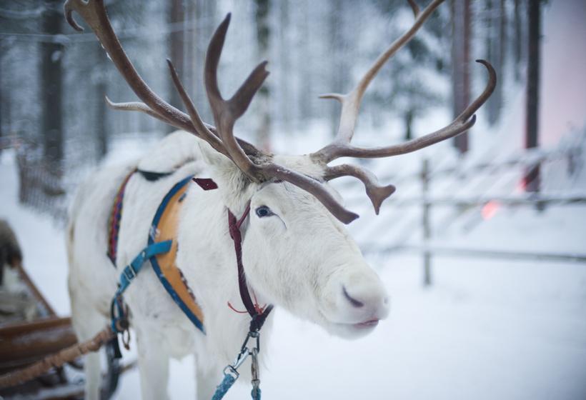 Laponie Finlandaise en famille : À la rencontre du Père Noël, voyage Europe