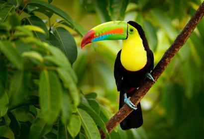 Escapade romantique au Costa Rica - Séjour d'exception, voyage Amérique Centrale