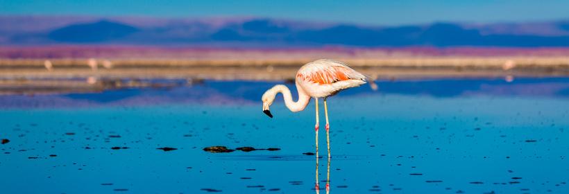 Voyage au Chili : Du désert d'Atacama au Salar d'Uyuni, voyage Amérique du Sud