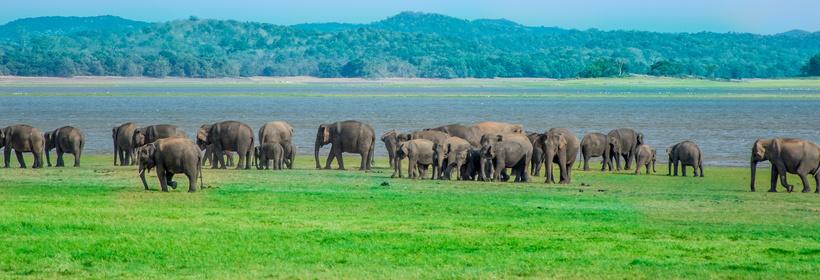 Voyage Sri Lanka Au pays de l'or vert, voyage Asie et Océanie