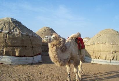 Ouzbékistan : Hors des sentiers battus, voyage Asie et Océanie
