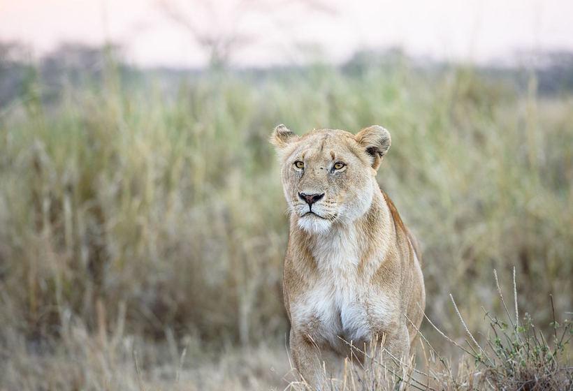 Voyage en Tanzanie : safari du sud en camp, voyage Afrique